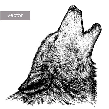 engrave wolf illustration