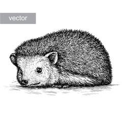 engrave hedgehog illustration