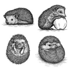 engrave hedgehog illustration