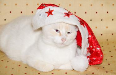 Ritratto di un gatto buffo con cappellino di natale