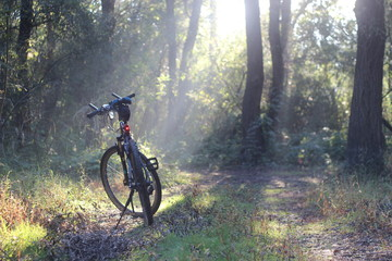 Bicycling on a forest path