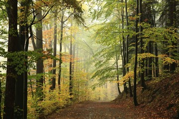 Path through the autumnal forest