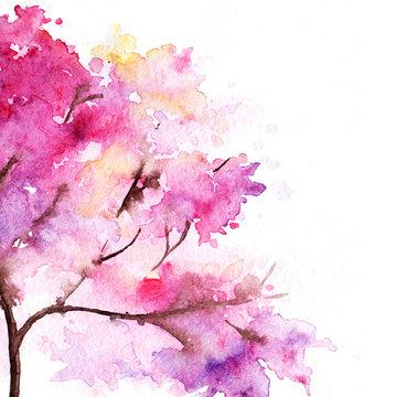 Single cherry sakura pink tree isolated