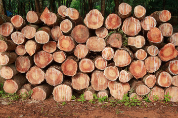 Stump texture background