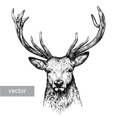 engrave deer illustration