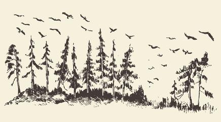 Hand drawn landscape fir forest migratory birds