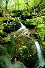 이끼계곡과 숲속의 자연