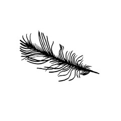 hand draw bird feather style sketch for registration cards