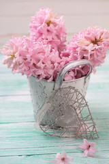 Fresh pink hyacinths flowers  in bucket and decorative heart