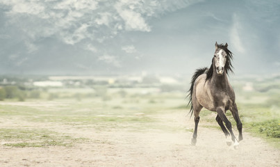 Young stallion horse running  forward over nature background, banner