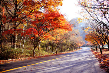 아름다운 가을의 모습 Fotobehang