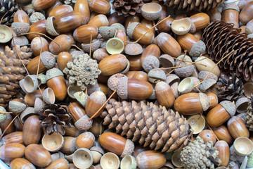 background acorns with cones