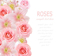 Flowers background isolated on white with sample text. Lily flowers