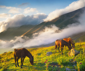 Horses in mountain valley. Beautiful natural landscape with animals