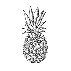 Pineapple fruit with fresh leaves in sketch style