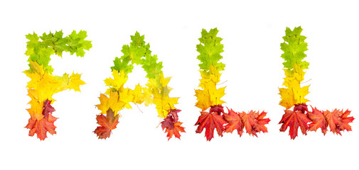 autumn leaves in shape of word life on white background