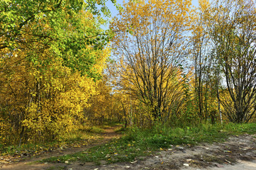 Autumn forest pathway, colorful and bright trees with yellow and green foliage, dry golden and bronze leaves on rural road near woods, sunny october beautiful day
