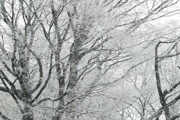 Snow downpour