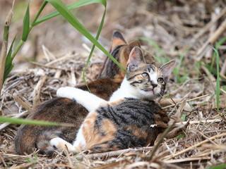 三毛猫の親子