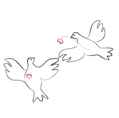 Couple of loving doves