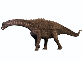 Ampelosaurus on White - Ampelosaurus was a herbivorous sauropod dinosaur that lived in Europe during the Cretaceous Era.