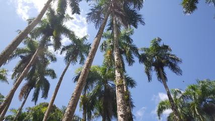 Palmentuin in Paramaribo Suriname