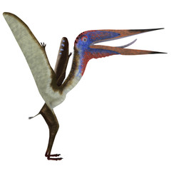 Zhejiangopterus Reptile - Zhejiangopterus was a carnivorous pterosaur dinosaur that lived in China during the Cretaceous Period.