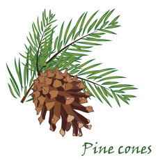 Fir tree branches with pine cone on white background