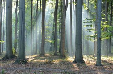 Keuken foto achterwand Bos in mist Morning in the forest