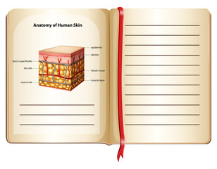 Anatomy of human skin on a page