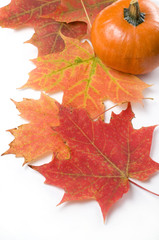 Red Maple Leaf with Small Pumpkin