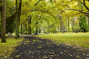 footpath in autumn park