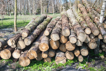 Firewood logs stacked and ready for the cold winter days