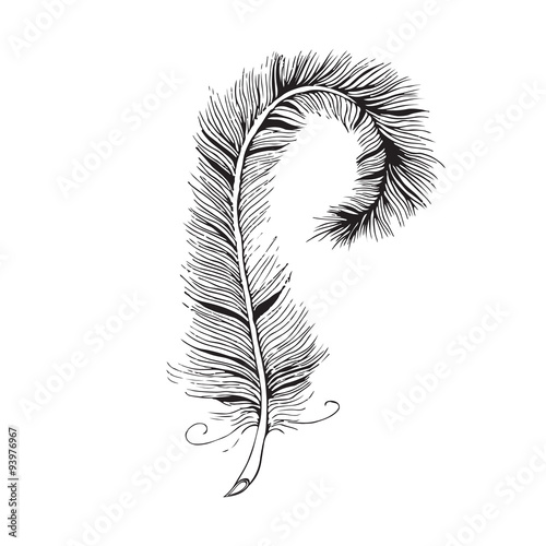 Line Art Feather : Quot vector feather line drawing stock image and royalty free