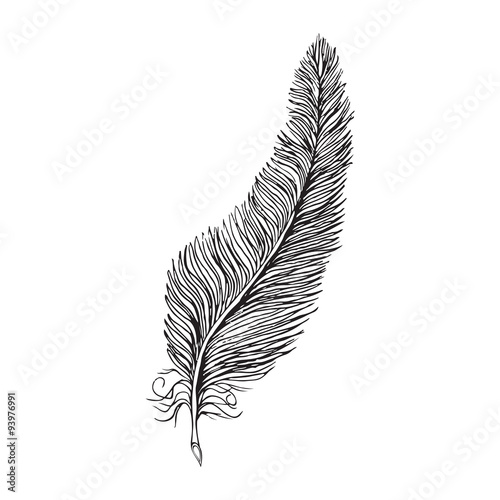 Line Drawing Feather : Quot vector line drawing feather stock image and royalty free