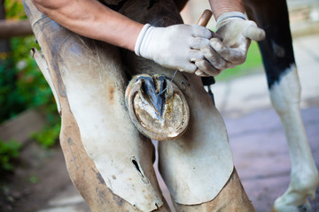 Detail of blacksmith's strong hands cutting out a horse hoof