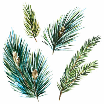 Raster watercolor fir-tree branches