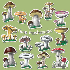 Vector collection of isolated mushrooms. Sticker elements.