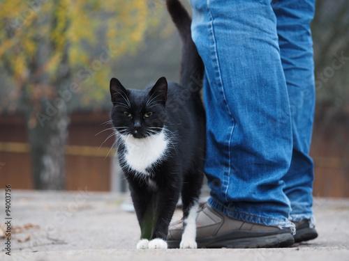 Почему кот трется об ноги хозяина
