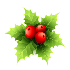 Vector Christmas holly with berries. Vector illustration