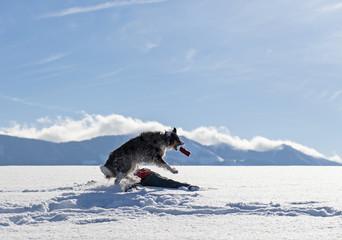 Spiel und Spass beim Hundespaziergang im Schnee
