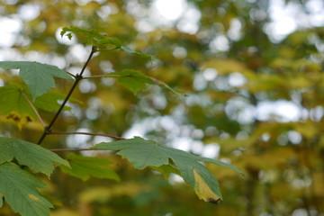 Bunt ist der Herbst