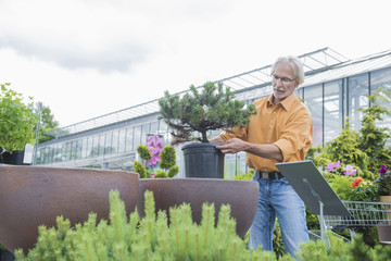 Mature man buying potted plant from plant Nursery, Augsburg, Bavaria, Germany