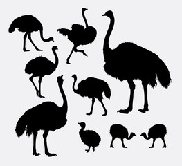 Ostrich poultry animal silhouettes. Good use for symbol, logo, web icon, game element, mascot, or any design you want. Easy to use.