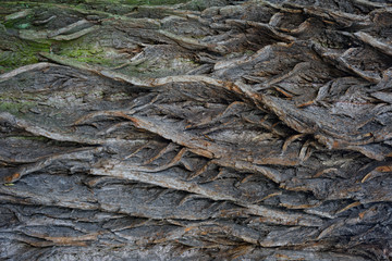 Rough wood texture background