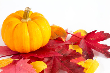 Decorative pumpkin and fall leaves on white background