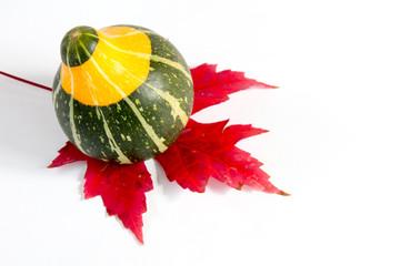 Green and orange gourd on a sugar maple leaf