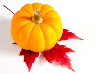 Small pumpkin on a red sugar maple leaf