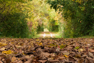 Fall Path Covered in Leaves