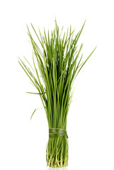 Chinese Garlic Chives also known as Ku Chai